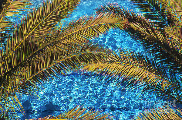 Photograph - Palms And Pool by Thomas R Fletcher