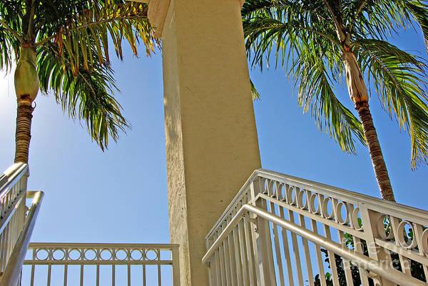 Wall Art - Photograph - Palms And Stairs by Zal Latzkovich