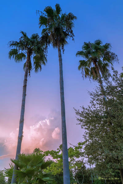 Wall Art - Photograph - Palms And Storms by Marvin Spates