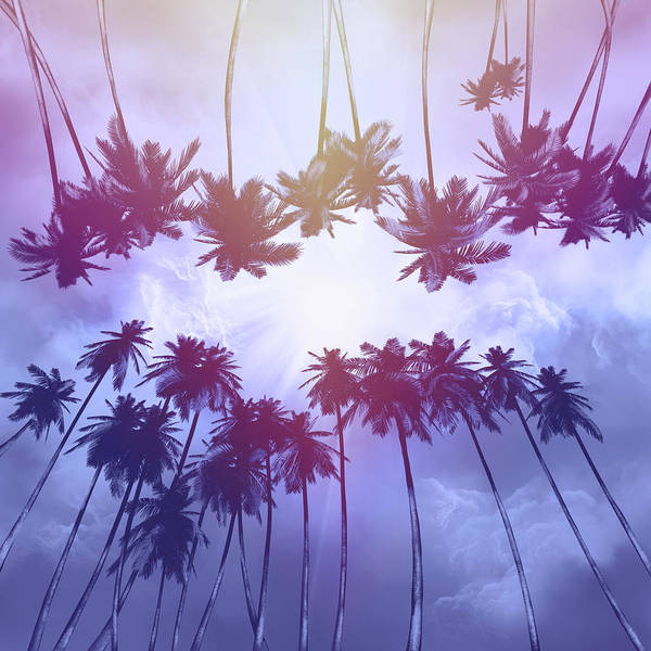 Wall Art - Digital Art - Palms And Sunset 2 by Bekim M