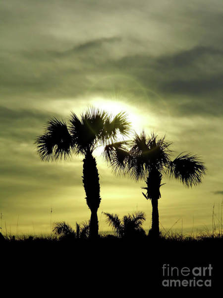 Photograph - Palms At Sunset by D Hackett
