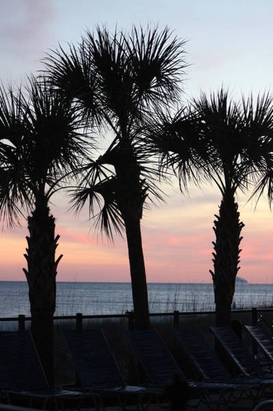 Wall Art - Photograph - Palms At Sunset  by Gayle Miller