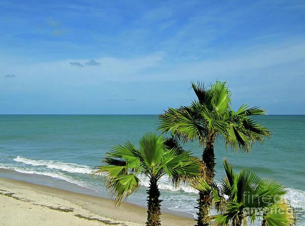 Photograph - Palms At Vero Beach by D Hackett