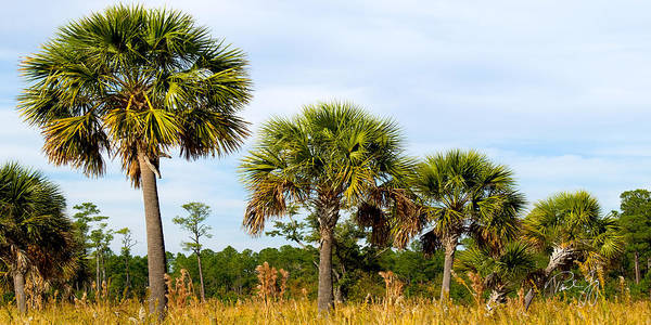 Wall Art - Photograph - Palms Bayou La Batre Alabama by Paul Gaj