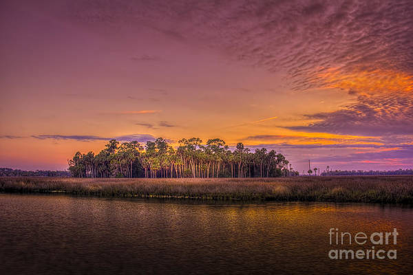 Marshland Photograph - Palms Delight by Marvin Spates