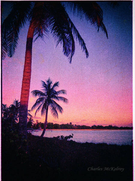Photograph - Palms In Honduras by Charles McKelroy