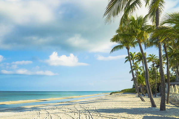 Photograph - Palms On The Beach by Sean Allen