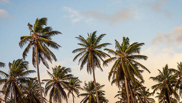 Photograph - Palms by Newwwman