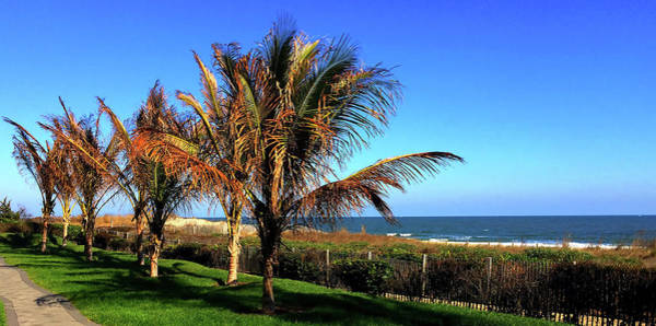 Photograph - Palms Trees On Md Eastern Shore by Reynaldo Williams