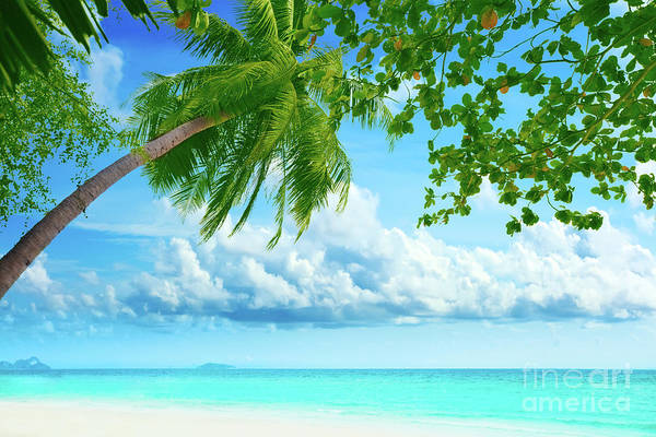Palmtree On The Beach Art Print