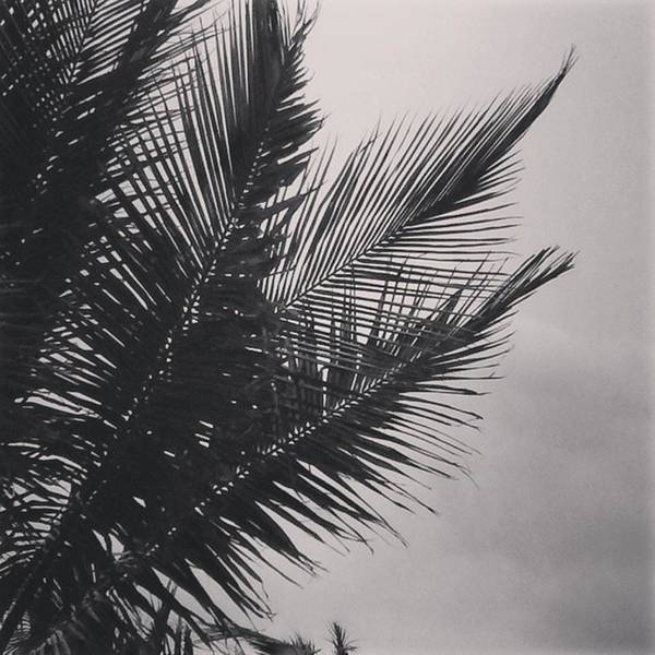 Black And White Photograph - Palm Trees  Against A Stormy Sky by Colleen Kammerer