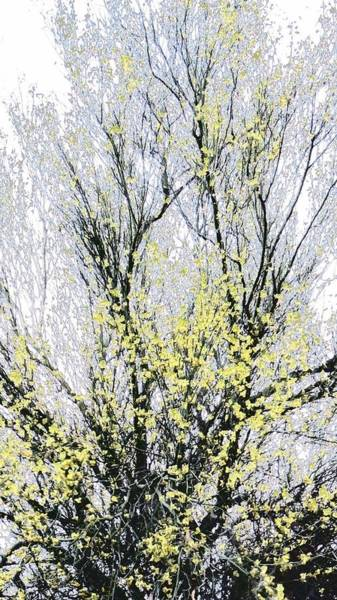 Photograph - Palo Verde Crystal by Judy Kennedy