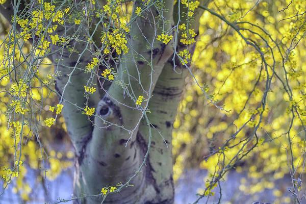 Photograph - Palo Verde Tree 5994-041818 by Tam Ryan