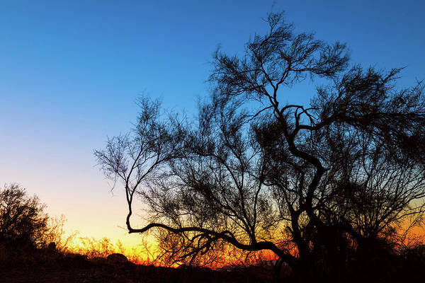 Photograph - Palo Verde Tree Silhouette Sunrise by James BO Insogna