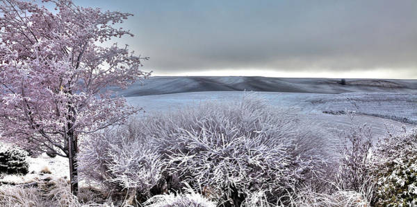 Photograph - Palouse Frost by David Patterson
