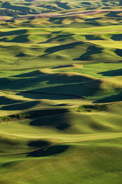 Wall Art - Photograph - Palouse Hills From Step Toe Butte #1 by John Trax