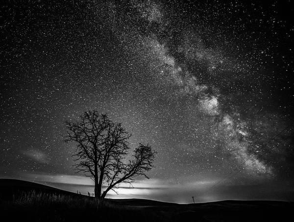 Neiman Photograph - Palouse Night Sky And Tree 3919 by Bob Neiman