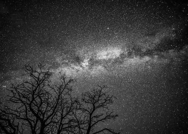 Neiman Photograph - Palouse Night Sky And Tree 3930 by Bob Neiman