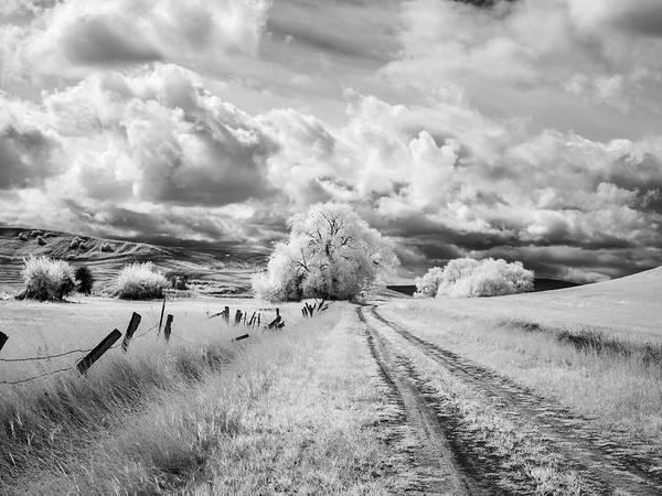 Neiman Photograph - Palouse Road And Tree Ir 0996 by Bob Neiman