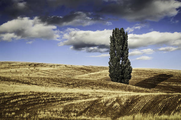 Wall Art - Photograph - Palouse Solitaire Clouds by Eduard Moldoveanu