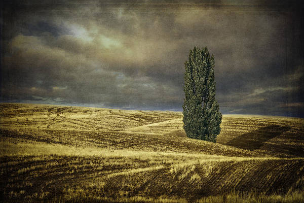 Wall Art - Photograph - Palouse Solitaire Textured by Eduard Moldoveanu