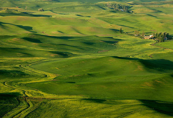 Wall Art - Photograph - Palouse Spring by Mike  Dawson