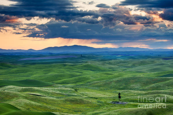 Green Tree Wall Art - Photograph - Palouse Storm by Mike  Dawson