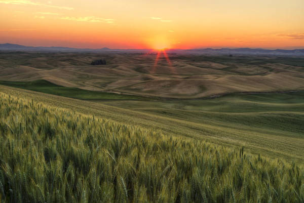 Photograph - Palouse Sunrise by Mark Kiver
