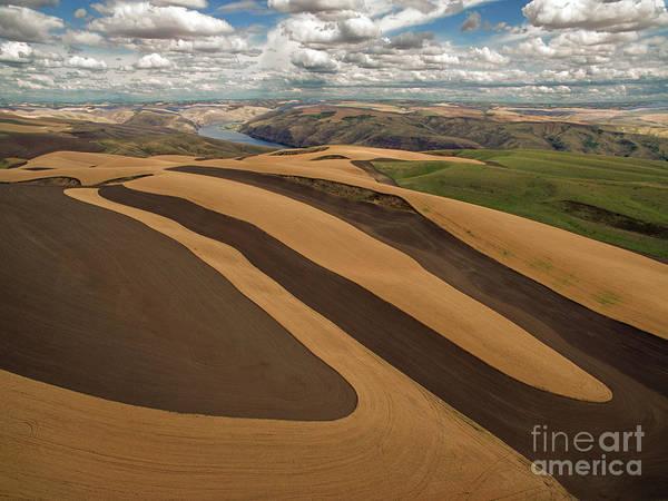 Wall Art - Photograph - Palouse Wheat Farm by Rick Mann