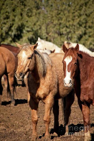 Photograph - Pals In The Corral by Teresa Wilson