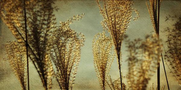 Wall Art - Photograph - Pampas Grass by Amy Tyler
