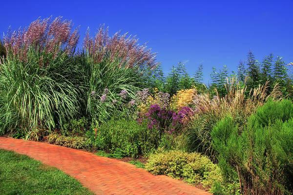 Photograph - Pampas Grass by Jill Lang