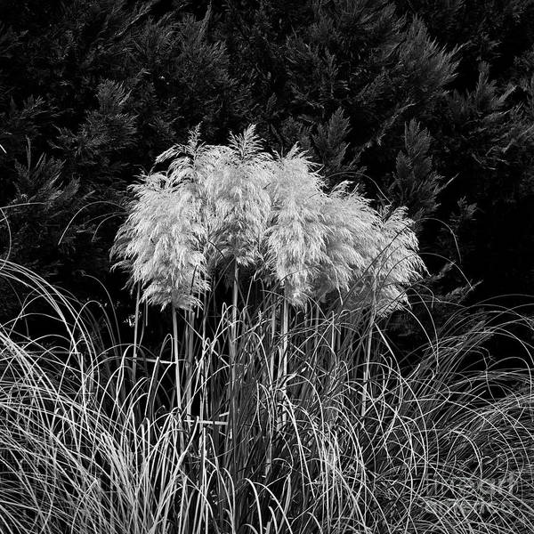 Photograph - Pampas by Patrick M Lynch