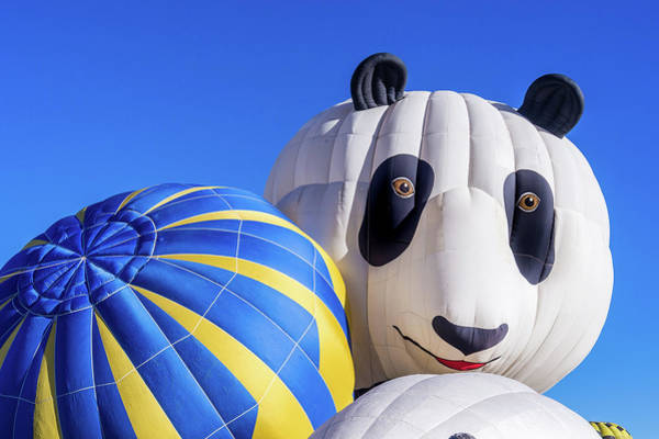 Photograph - Panda Bear Balloon by Robin Zygelman