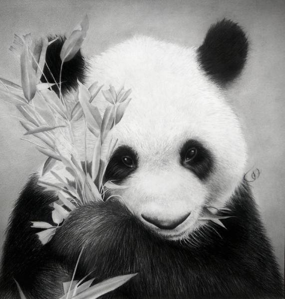 Alonzo Drawing - Panda by Jonatan Alonzo