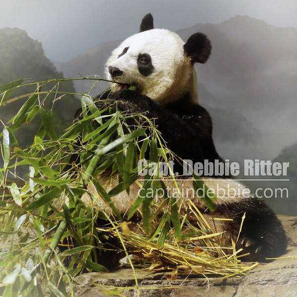 Photograph - Panda Mei Xiang 6228 by Captain Debbie Ritter