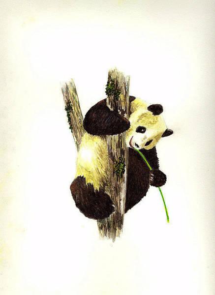Wall Art - Painting - Panda by Michael Vigliotti