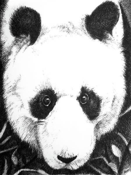 Drawing - Panda Portrait by Matt Hood
