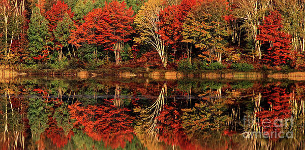 Photograph - Panorama Fall Color Thorton Lake Upper Penninsula Mi by Dave Welling