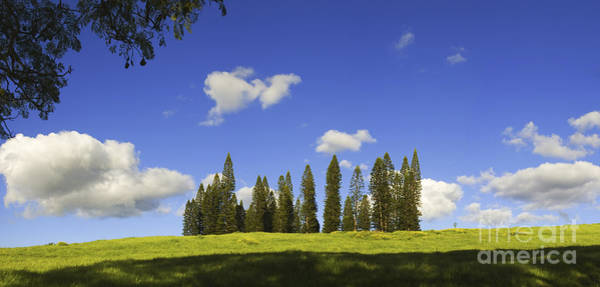 Norfolk Pine Wall Art - Photograph - Panorama Green Meadow by Ron Dahlquist - Printscapes