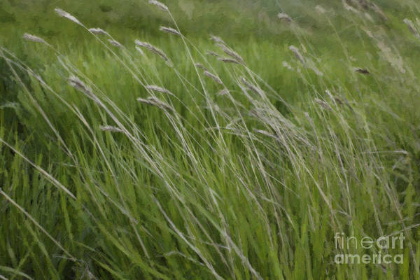 Photograph - Panorama Hills Bluff Grasses by Donna L Munro