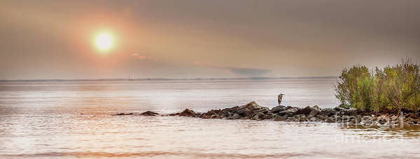 Photograph - Panorama Of A Great Blue Heron Standing On A Rock Jetty by Patrick Wolf