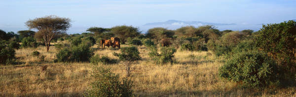 Nature Conservancy Photograph - Panoramic View Of African Elephants by Panoramic Images