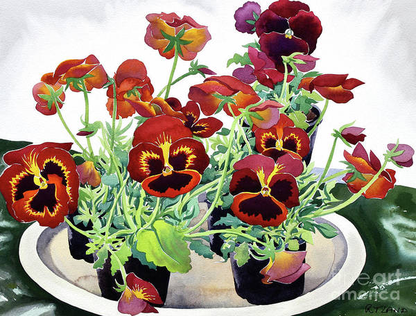 Wall Art - Painting - Pansies by Christopher Ryland