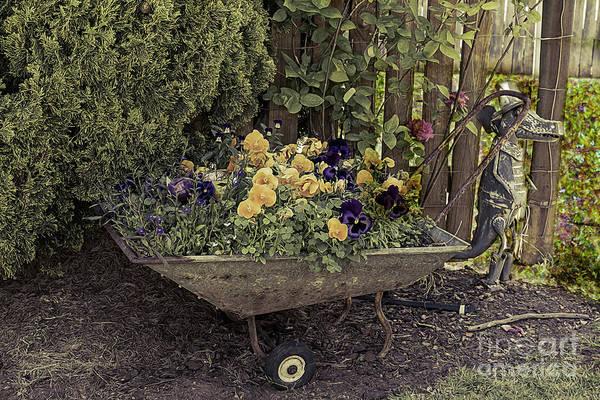Photograph - Pansies In A Wheelbarrow by Elaine Teague