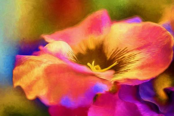 Wall Art - Photograph - Pansy In Color by Ches Black
