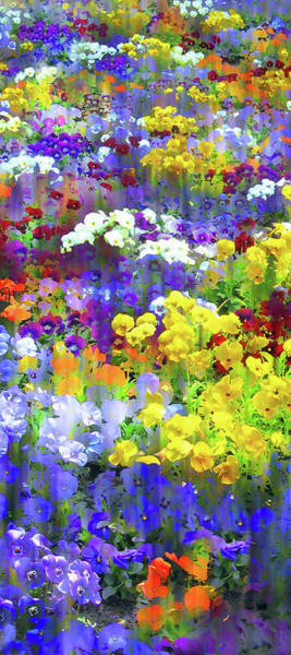 Wall Art - Photograph - Pansy Party II by Jessica Jenney