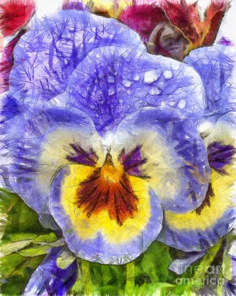 Pencil Drawing Photograph - Pansy Pencil by Edward Fielding