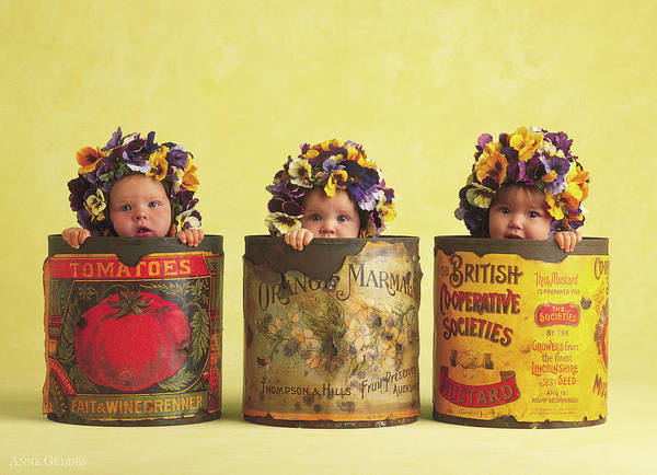 Baby Photograph - Pansy Tins by Anne Geddes