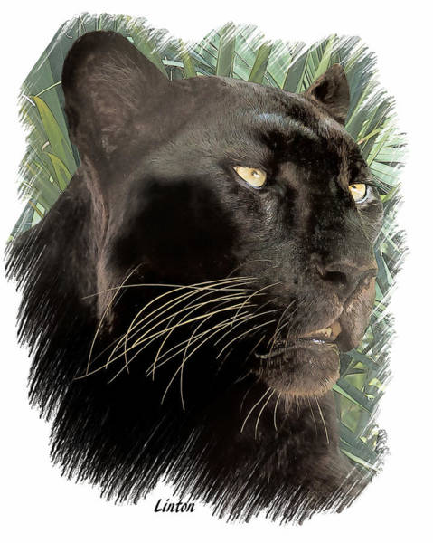Digital Art - Panther 8 by Larry Linton